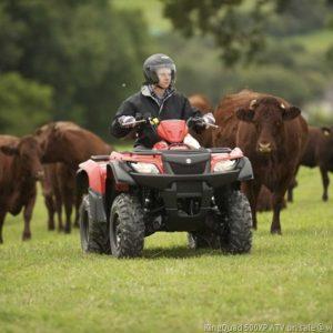 CowsB01501.3